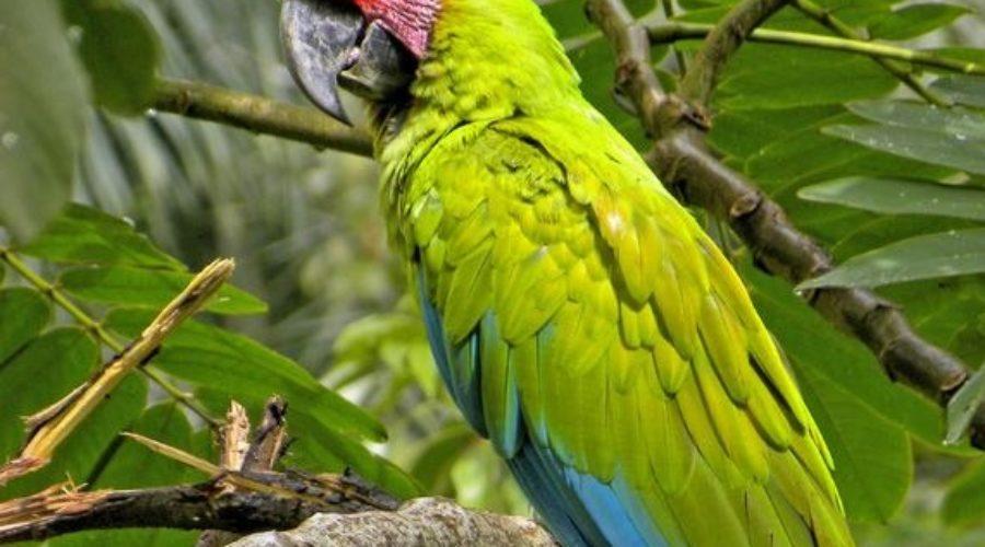 Tamaulipas recibe invitación a Feria Nacional de Turismo Ornitológico